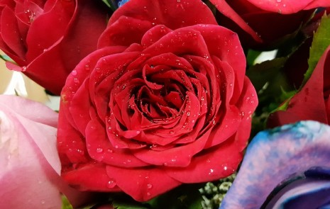 صورة تفسير حلم الورد الاحمر