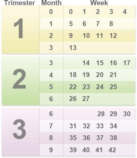 صورة كيفية حساب عمر الجنين