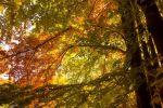 صورة معلومات رهيبة عن اشجار الزيزفون