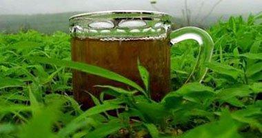 صورة اطباء الشاي الاخضر