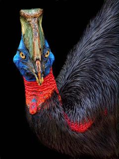 صورة اجمل حيوانات صور روعه
