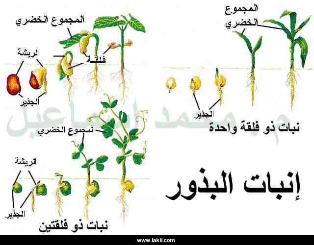 صور مراحل نمو الانسان والنبات بالصور