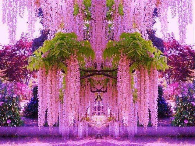 صور حديقة زهرة الحب بالصور