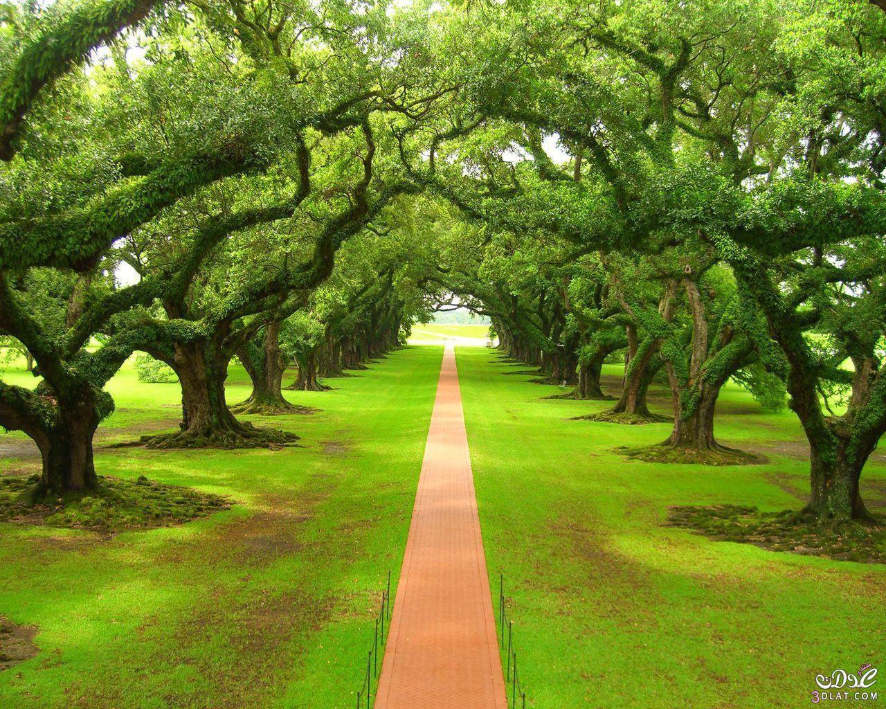صورة مناظر اشجار جميله