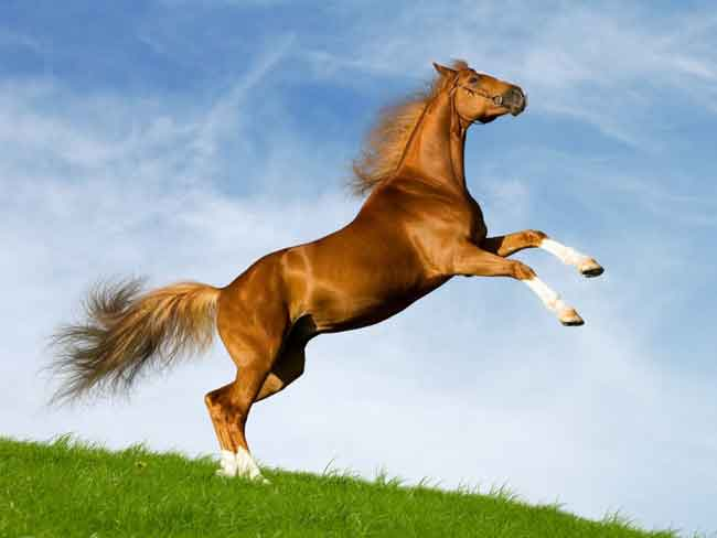 صورة تفسير رؤيا الحصان في المنام